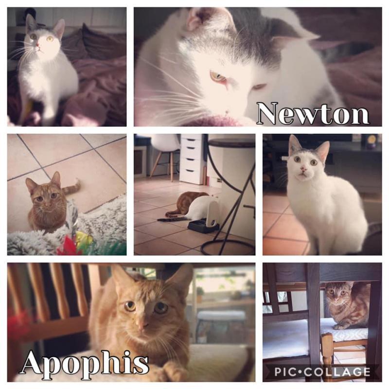Newton & Apophis